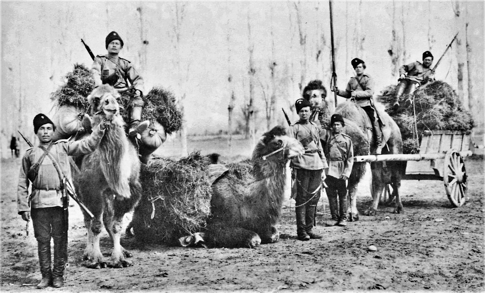 Cossacks with camels. Second half of the 19th century.
